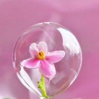 В мыльном пузыре. :: Марина
