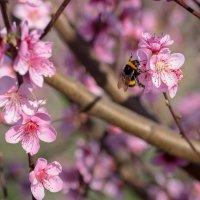 Весна наступила :: Елена Маковоз
