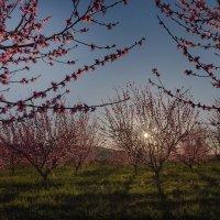 Закат в персиковом саду  . Бахчисарай :: Елена Маковоз
