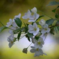 Весна… И хочется весь мир обнять… согреть теплом души… :: Ольга Русанова (olg-rusanowa2010)
