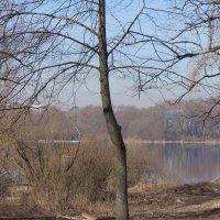 Весна. :: Татьяна Гусева