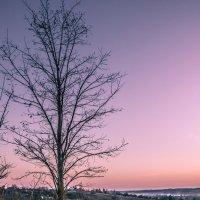 Путь к дереву :: Sergiy Korkulenko