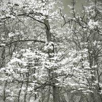 Птицы весны. :: Андрий Майковский