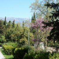 А горы так близко... :: Елена Гуляева (mashagulena)