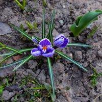 Первый цветок :: dindin