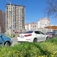 Весенний день :: Нина Сигаева