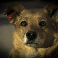 Собачья жизнь :: Сергей Кузнецов