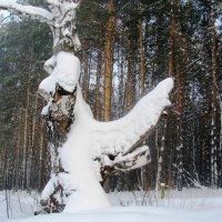 Причуды зимы :: Наталья Петровна Власова