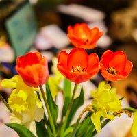Весенний букет :: Николай Николенко