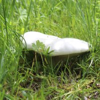 грибы, ЮКО Казахстан :: Бахытжан