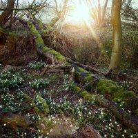 В мартовском лесу. :: Надежда