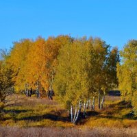 Золотая осень :: Геннадий