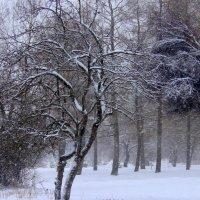 В парке зимой :: Жанна