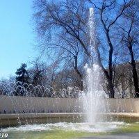Фонтан на площади Советов :: Нина Бутко