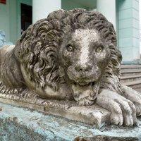 Лев в старинной усадьбе Пусловских. :: Valera Solo