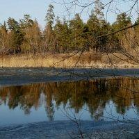 Весенние отражения... Большое Васильевское озеро... :: Наталья Меркулова