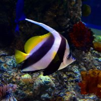 Рыбка :: dindin