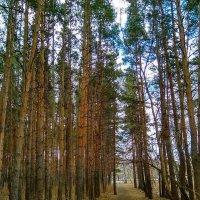 По лесам шагал апрель ... :: Татьяна Котельникова
