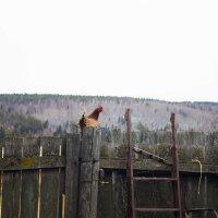 Утро в деревне :: Евгений Князев