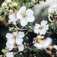 Дачные цветы :: Дарья Воронина