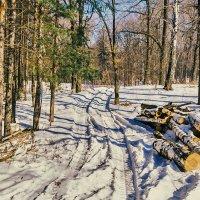 Рубка леса :: Любовь Потеряхина