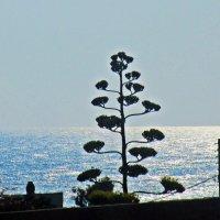 Средиземное море :: Лариса