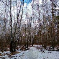 Апрельской акварелью раскрашены леса ... :: Татьяна Котельникова
