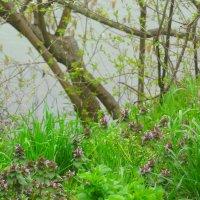 Весна на берегу пруда... :: Тамара (st.tamara)