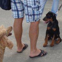 Собаки тоже смеются, только хвостом... :: Алекс Аро Аро