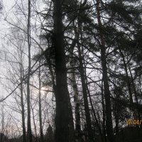 лес :: Smit Maikl