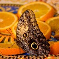 Сад живых бабочек :: Ирина Руднева