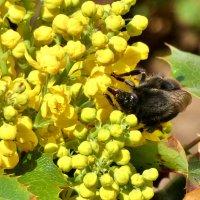 Жёлтый цветок и пчела... :: backareva.irina Бакарева