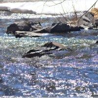 Вешние воды. Река Ай. Златоуст. :: Александр Шимохин