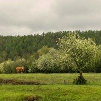 весна :: Екатерина Агаркова