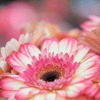 Красота и элегантность :: Наталья Котова