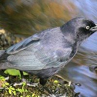 Умная птичка. :: оля san-alondra