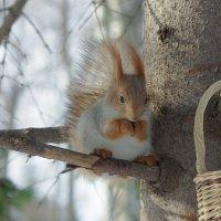 ..в корзиночке орешки! :: * vivat.b *