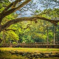 В тени лесов Камбоджи :: Марина Маркевич