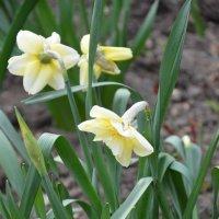 Весна :: Ольга Беляева
