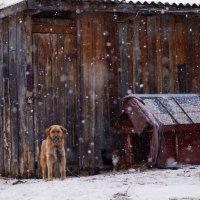 Собачья работа :: Денис Зорин