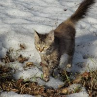 По последнему снегу :: Светлана Рябова-Шатунова