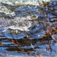 Солнце, воздух и вода.. :: Александр Шимохин