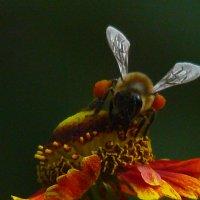 Галифе из цветочной пыльцы :: veilins veilins