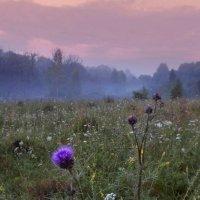 Утренний туман :: Александр Бойченко