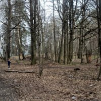 Когда то, деревья тоже были малышами... :: Ольга Кривых