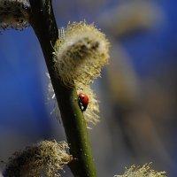 Весна пришла :: Анастасия Фомина