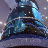 аквариум в торговом центре :: Галина R...