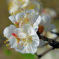 Когда воскресшая природа в чертог цветущий свой манит . :: Валентина ツ ღ✿ღ