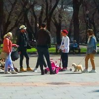 Весна, весна на улице! :: Валентина (Panitina) Фролова
