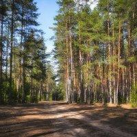 В лесу :: Алексей (GraAl)